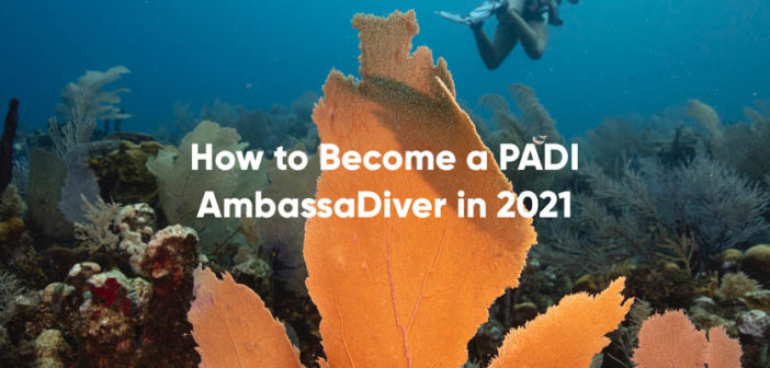 How to Become a PADI AmbassaDiver in 2021